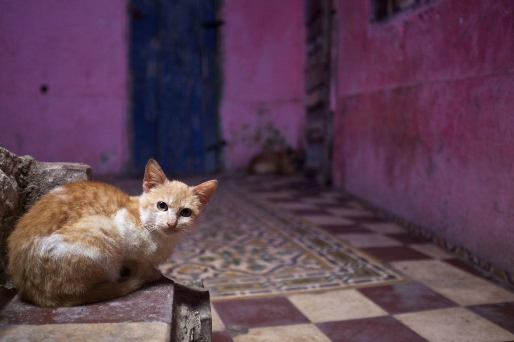 Chat Essaouira essaouira VILLA GARANCE ESSAOUIRA
